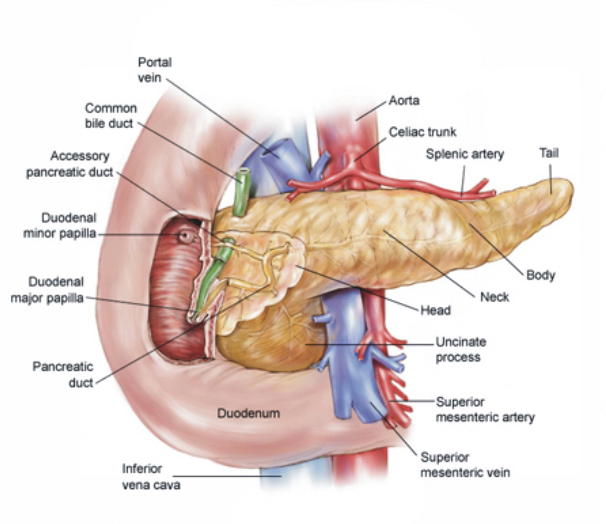 BATU EMPEDU (Kolelitiasis)