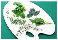 obat herbal tradisional