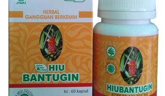 HIU BANTUGIN Herbal Atasi Masalah Batu Ginjal